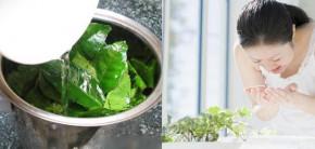Nấu nước lá trà xanh để rửa mặt 2 lần mỗi ngày, da bật tông trắng mịn như bông bưởi